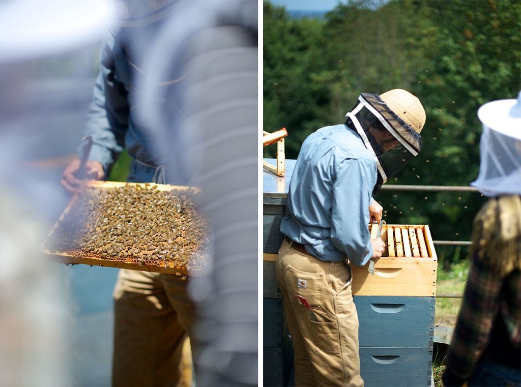 Comparing Commercial Beekeeping With Small Scale Community Is Like A Commercially Canned Tomato Tomatoes You Yourself